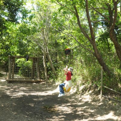 三重県民の森画像