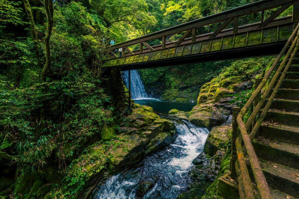 日本の貴重なコケの森 赤目四十八滝